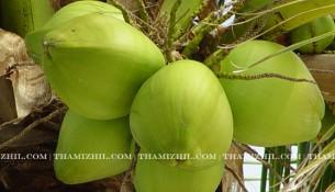இளநீர், illaneer, tender couconut, coconut